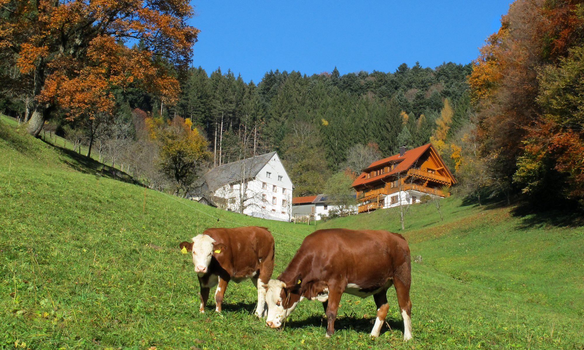 Klausenhof Dreisamtal